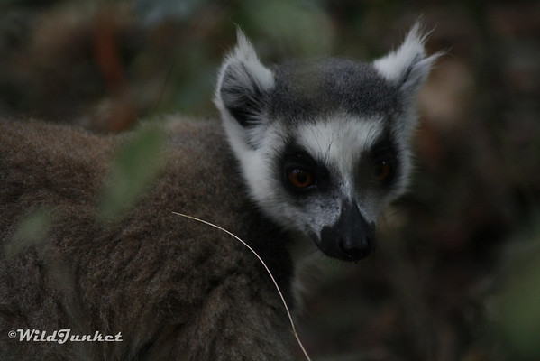 Things You Might Not Know About Madagascar Wild Junket - 8 cool facts about madagascar