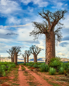 Baobab Trees and the Road to Somewhere - M
