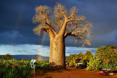 Baobab Tree and Rainbow - M
