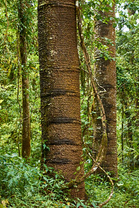 Jungle Forest Scene, Amber Mountain - M