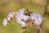 Wildflowers on the way to Mandraka