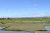 Rice fields outside of Antananarivo