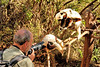 Wolfgang gives the Coquerel's sifakas a photography lesson.