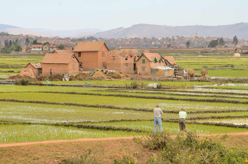 Rice fields, houses and dikes in Tana