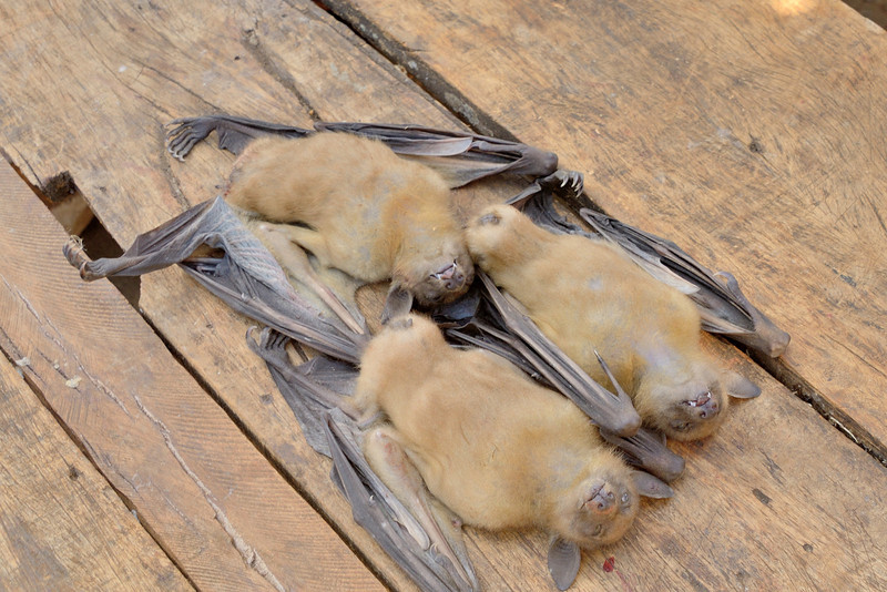 Bats for sale (to eat) at the Antsiranana Market