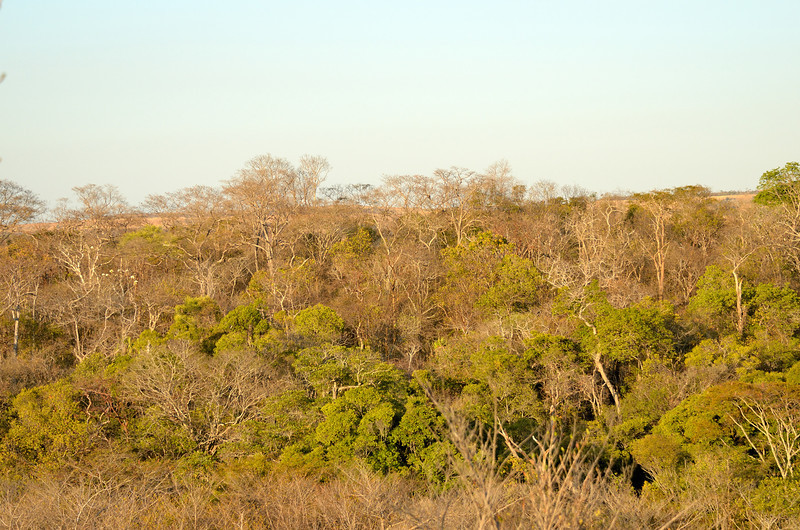 The dry deciduous forest of Ankarana Reserve
