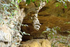 A naturally occuring rock formation that looks like the head of a bat is at the entrance to the bat cave.