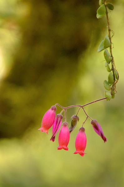 Flowering epiphyte