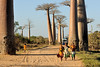 The Avenue or Alley of the Baobabs has been a center of local conservation efforts, and was granted temporary protected status in July 2007 by the Ministry of Environment, Water and Forests, the first step toward making it Madagascar's first natural monument.