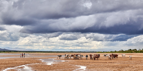 Herd on the River Bed