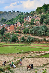 Malagasy Village and Rice Field, near Saha