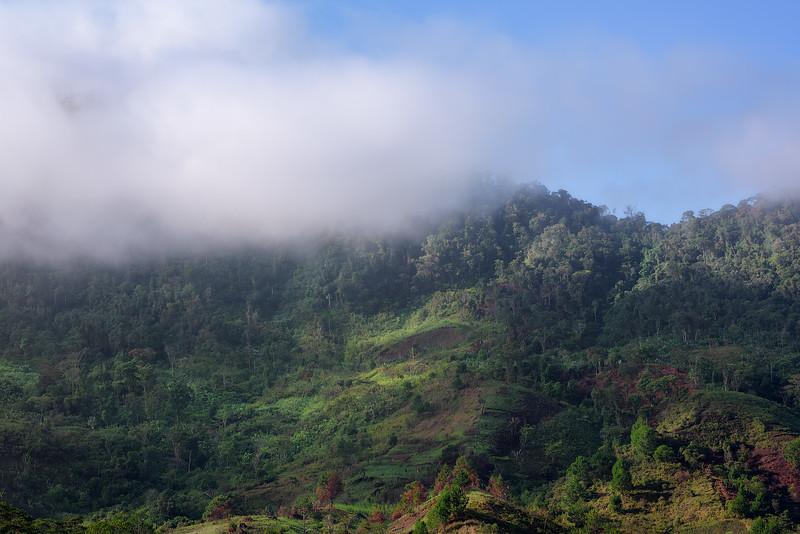 Morning in Ranomafana National Park