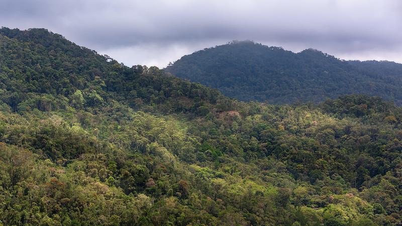 Madagascar Rain Forest