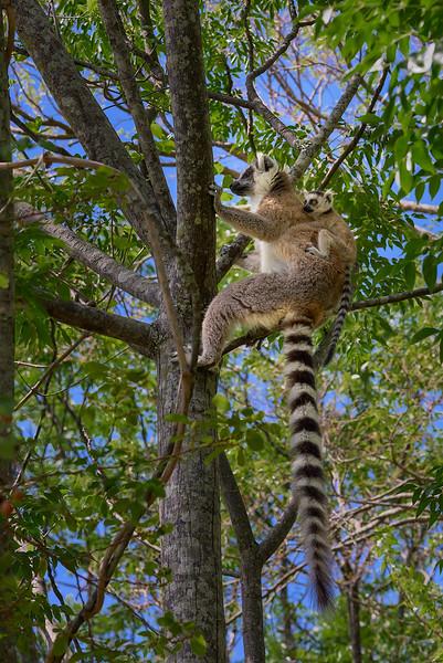 Anijaro Park, Madagascar
