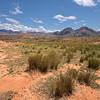 Madagascar Desert