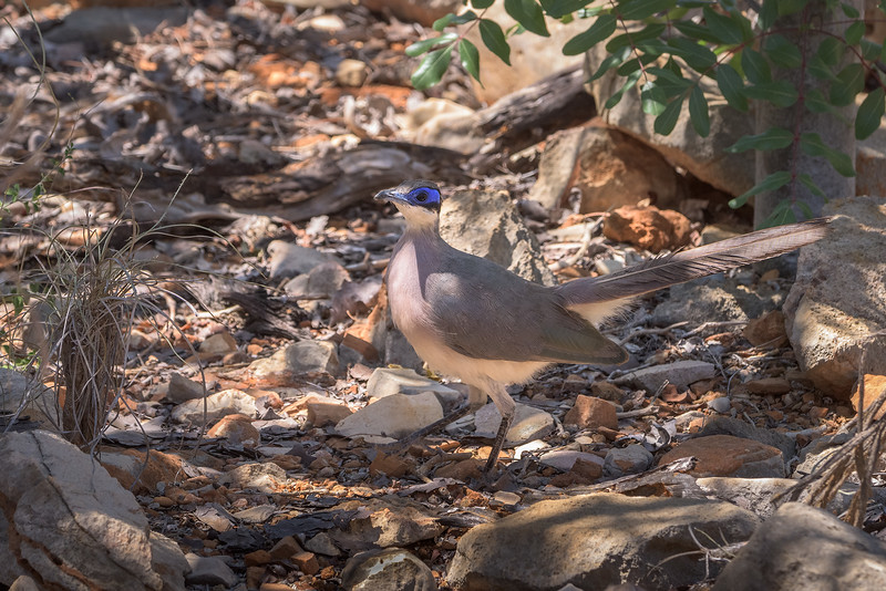Bird with Blue