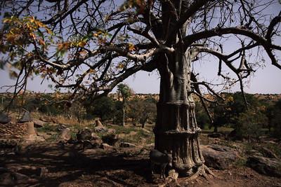 Boabab tree in moonlight, Tireli