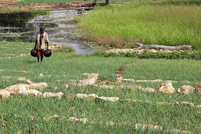 Rice paddies, near Dogon Country