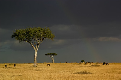 Stormy Rainbow over Masai Mara