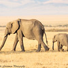 cow elephant and calf -  Masai Mara Preserve - Kenya - Copy