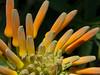 SSR Botanical Garden, Pamplemousses, Mauritius