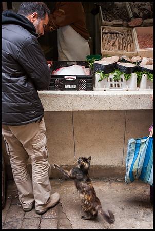 Cat shopping for fish, Fes Medina