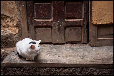 Cat guarding entrance, Fes Medina