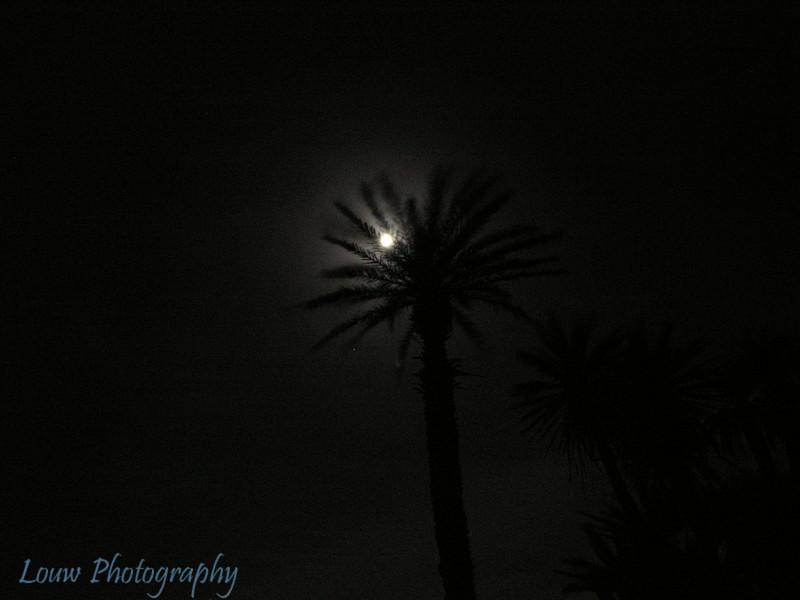 Sahara moonlight