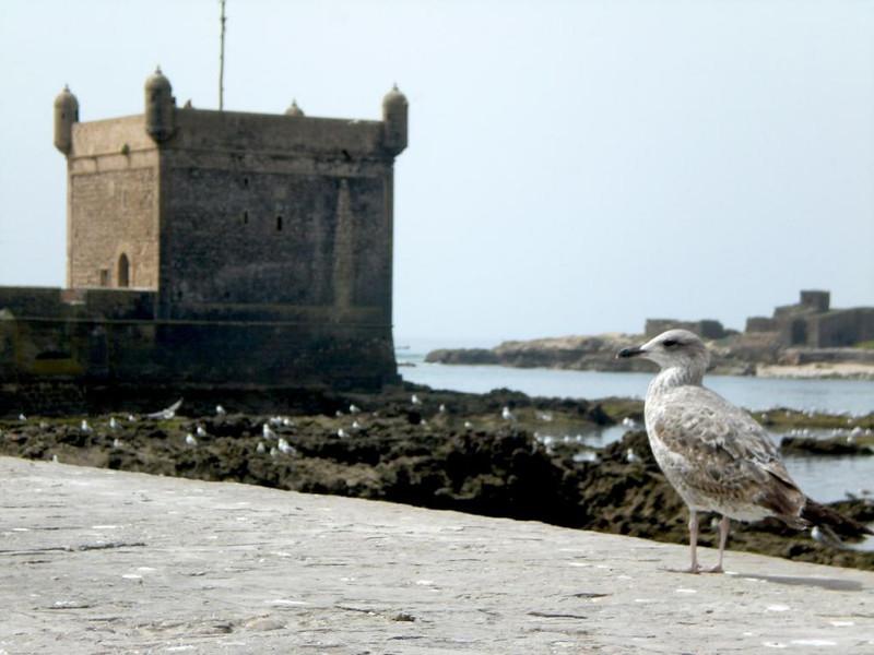 The Essaouira Citadel.