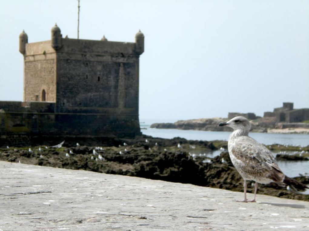 essaouria citadel