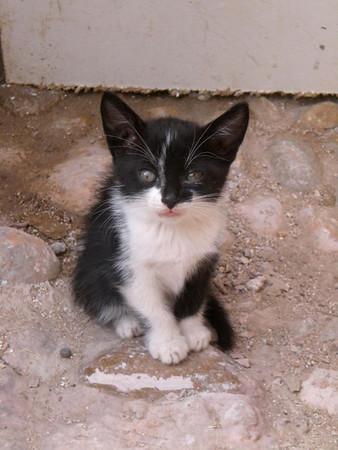 morocco kitten