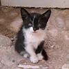 A kitten in Essaouira, Morocco.
