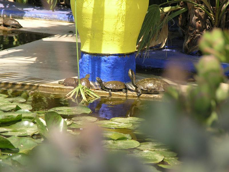 Turtles at the Jardin Majorelle