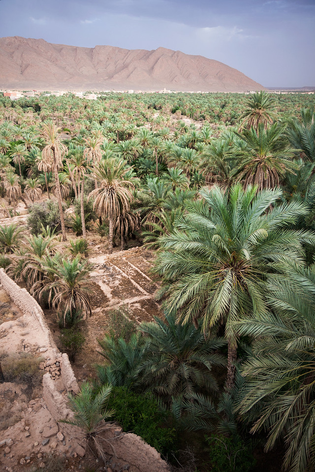 Looking across the oasis at the Algerian border.<br /> <br /> Location: Figuig, Morocco<br /> <br /> Lens used: Canon 17-55mm f2.8 IS