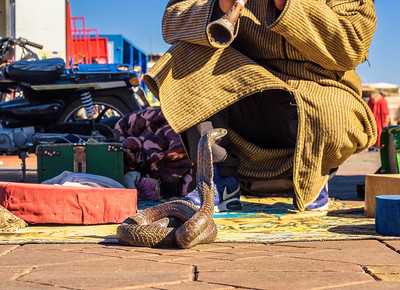 Snake charmer plays music for his cobra at the Jemaa el-Fnaa square in Marrakesh