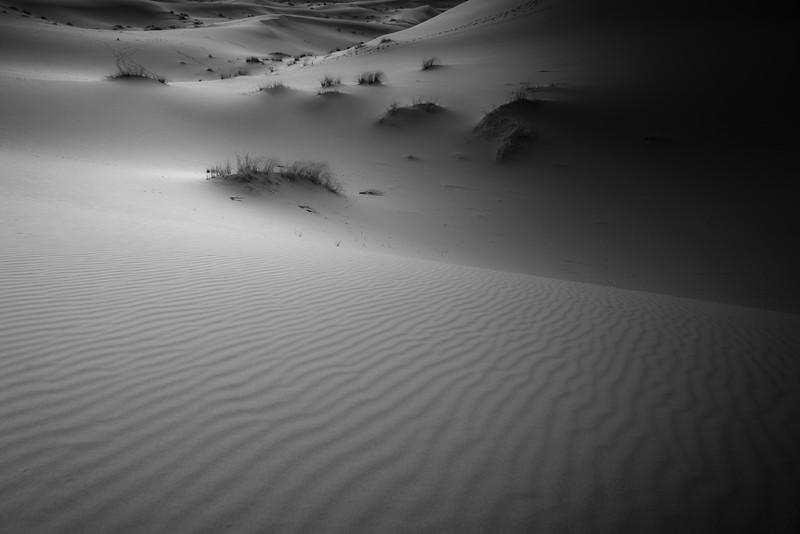20170102_KW_LN_Dune_Grasses3