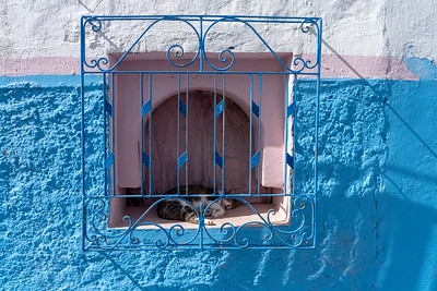 Cat inside Kasbah of the Udayas