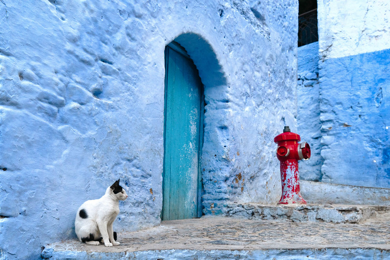20181001KW-Chaouen_Cat_and_Hydrant