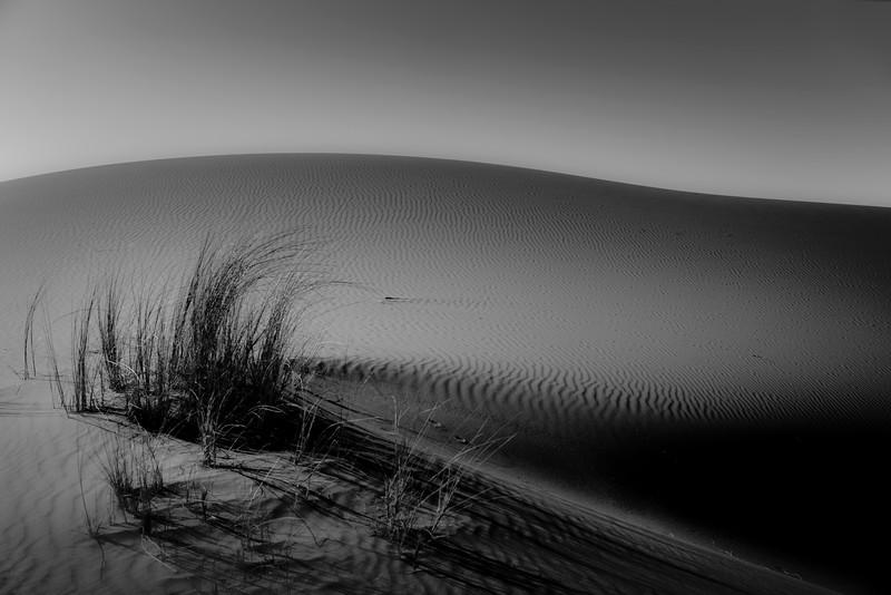 20170102_KW_LN_Erg_Chebbi_Dune_Grasses