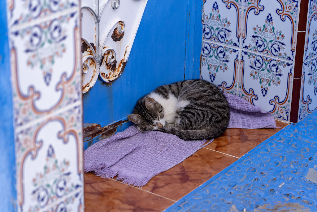 Cat sleeping in Chefchaouen, Morocco