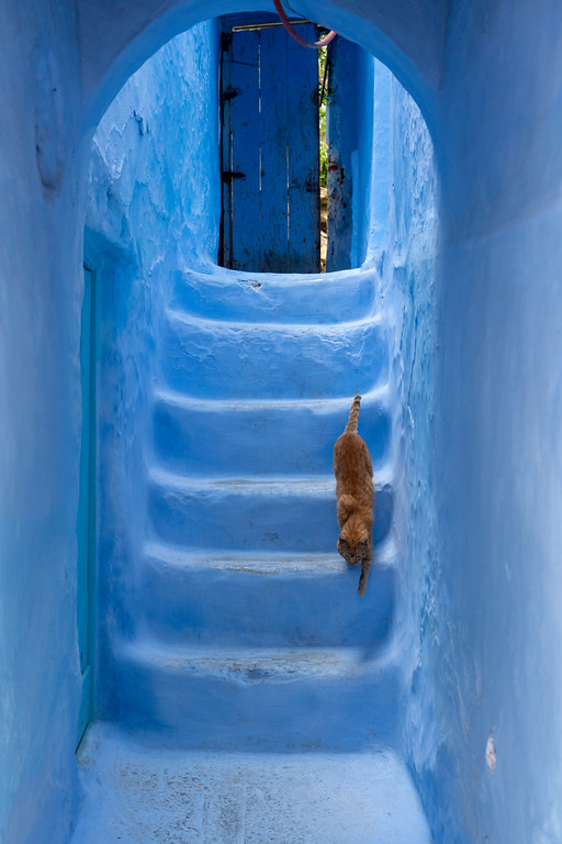 Cat in Chefchaouen, Morocco