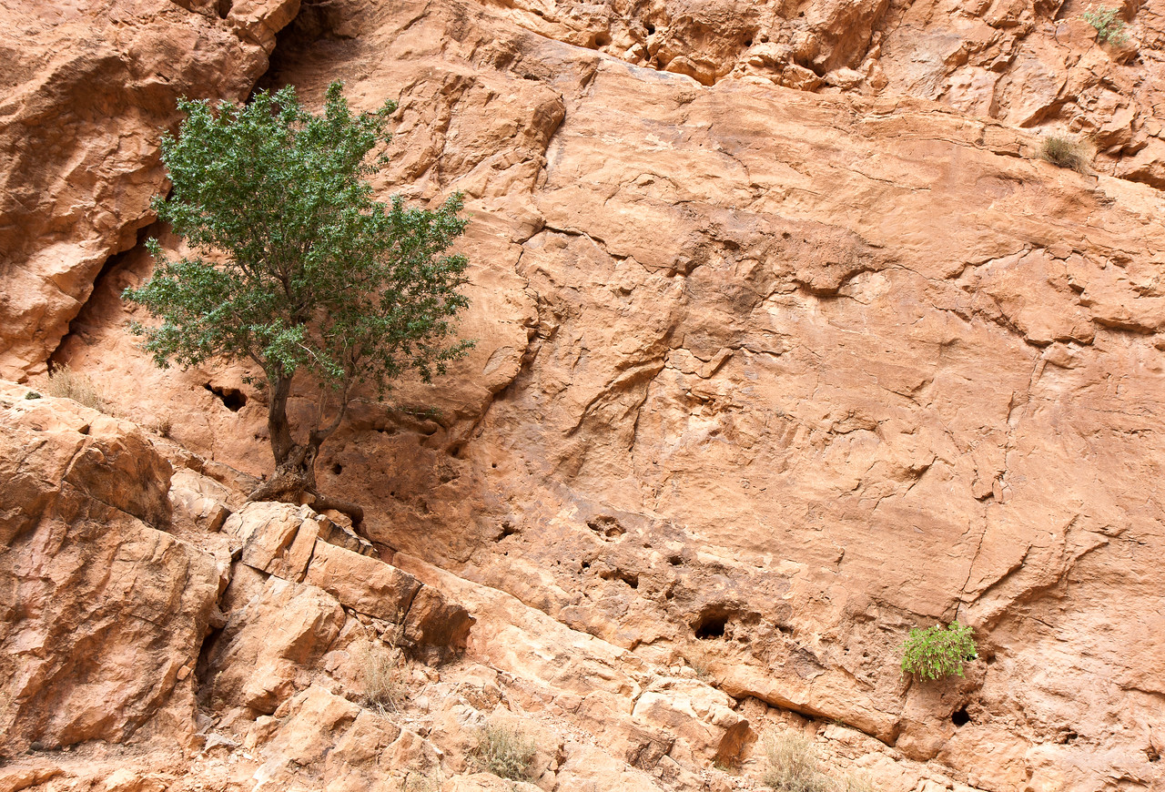 Tree and cliff face.<br /> <br /> Location: Todra Gorge, Morocco<br /> <br /> Lens used: Canon 17-55mm f2.8 IS