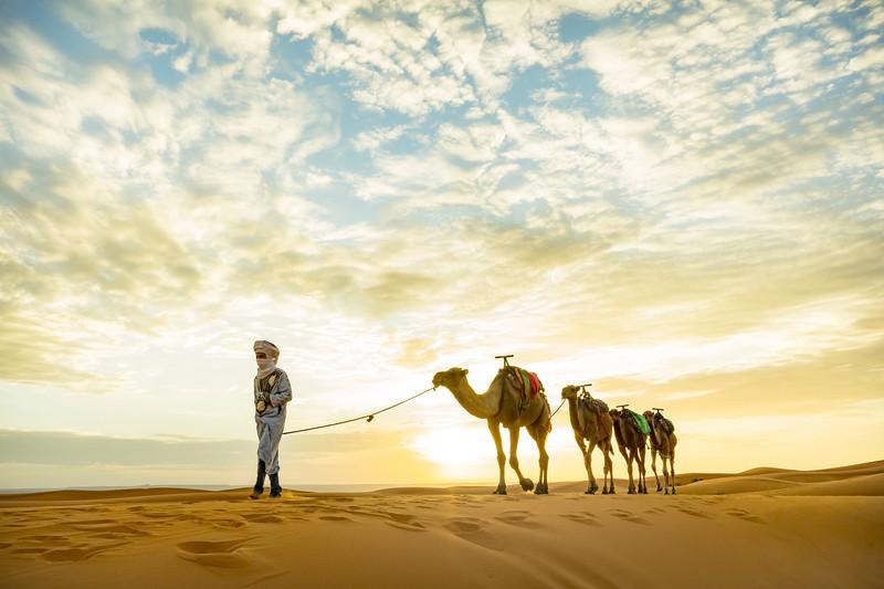 20181008KW-Camel_Train_Walking_Backlit