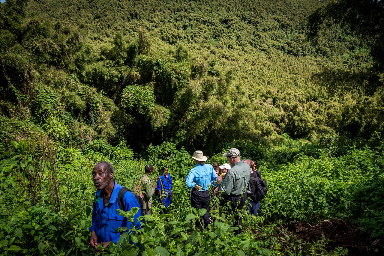 Bushwacking Through the jungle