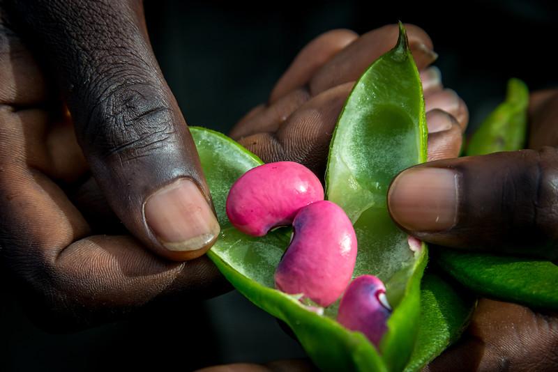 094_2014_Golden_Monkeys_Rwanda-8584