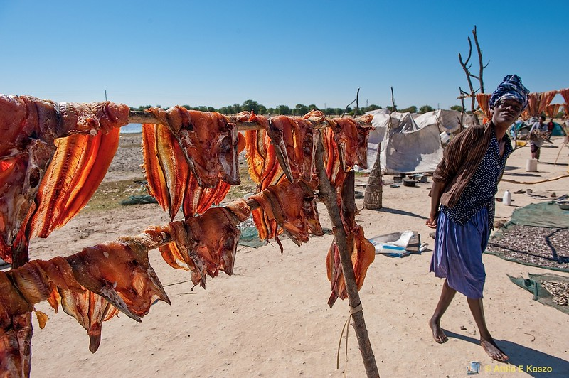 Dried Fish Sellers, Outapi, North Namibia