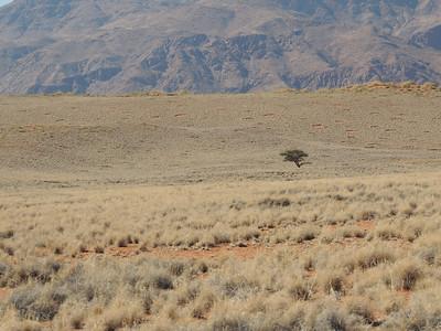 Namib-Rand Nature Reserve - Wolwedans May 2013