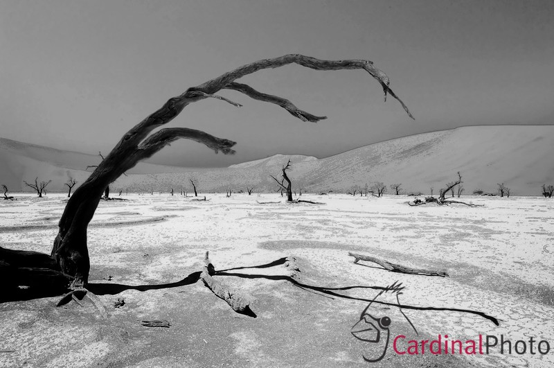 Hiking several miles with gear into this parched ancient lake bed was worth it for the stark vistas it revealed. Capturing that drama naturally led me to making a black and white image once I found a compelling arrangement of dead trees, brances and the enclosing sand dunes. Dead Vlei, Sossusvlei, Namib Desert, Namibia.