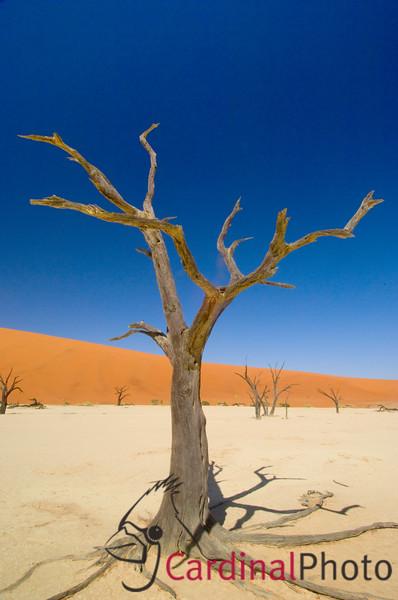 Sossusvlei Dunes & Dead Vlei 1/ 40s, at f/22 || E.Comp:0 || 12mm || WB: AUTO 0. || ISO: 200 || Tone: AUTO || Sharp: AUTO || Camera: NIKON D2Xon: 2005:11:18 23:37:36