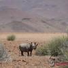 Palmwang Rhino Camp 1/ 2500s, at f/4.8 || E.Comp:0 || 380mm || WB: AUTO 0. || ISO: 400 || Tone: AUTO || Sharp: AUTO || Camera: NIKON D2Xon: 2005:11:22 01:01:03